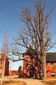 Large Trees (2418668704).jpg