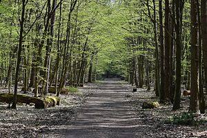 Kabaty Woods - Kabaty Woods