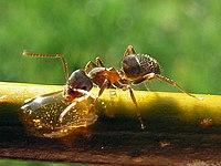 hangyák látványa