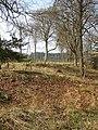 Last year's leaves, Saintlow Inclosure - geograph.org.uk - 1234661.jpg