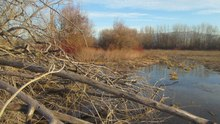 File:Late Winter Afternoon in Munson Park Wetlands.webm