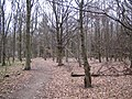 Latimer, Codmore Wood - geograph.org.uk - 138866.jpg