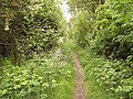 Leafy pathway - geograph.org.uk - 460415.jpg
