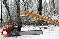 Leechwald Chainsaw Massacre (12343063074).jpg