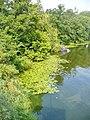 Lehnitzsee - Ufer (Lehnitz Lake Shore) - geo.hlipp.de - 40894.jpg