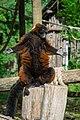 Lemur (36568689256).jpg