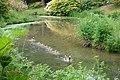 Leonardslee Gardens - goose, seven goslings, gander (geograph 1898456).jpg