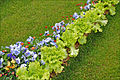 Lettuce Jardin éphémère (Nancy).jpg
