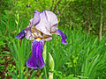 Leutratal-Iris-X-1308.jpg