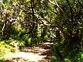 Levada 25 Fontes, Madeira, Portugal, June-July 2011 - panoramio (1).jpg