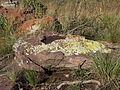 Lichens on Groothoek - 001.JPG