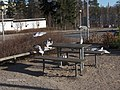 Linnut,Kivikko - panoramio.jpg