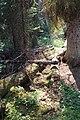 Little Yoho Valley IMG 4823.JPG