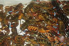 Lobster King Seafood Restaurant Scarborough On Mv