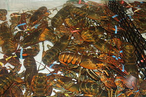 Lobster - Lobsters awaiting purchase in Trenton in Hancock County, Maine
