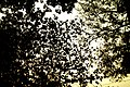 Lodhi Garden Tree Leaves.jpg