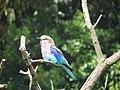 London Zoo 00959.jpg