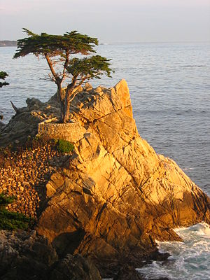 Lone Cypress Sunset.JPG