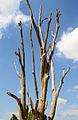 Lonely tree2.jpg