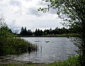 Looking across Florence Lake. VIEW IN PANORAMIO FOR DESCRIPTION - panoramio.jpg