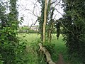 Looking through the hedge - geograph.org.uk - 1267768.jpg