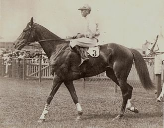 Chipping Norton Stakes - Image: Lough Neagh 1937 AJC Randwick Cumberland Plate Trainer Tim Brosnan