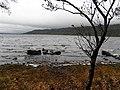 Lough shore at Inishtemple Island - geograph.org.uk - 2133347.jpg