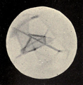 Lowell - Mars (1896) - Plate 21 Figure 1.png