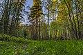 Lugnets naturreservat 2019-05-23 01.jpg