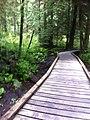 Lynn creek may 2012 - panoramio.jpg