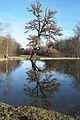 München Schlosspark Nymphenburg Badenburger See 029.jpg