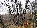 M3, Moldova - panoramio (4).jpg