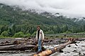 Man standing on a log over the over the Carbon River by the intersection of Fairfax Forest Reserve Rd E (Carbon River Rd) and NF-7810 (Cayada Creek Road) looking North in Mt. Baker-Snoqualmie National Forest, WA (DSC 0613).jpg