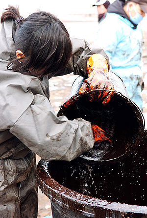 2007 South Korea oil spill - A volunteer worker collects oil from the beach