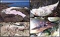 Marine mammals stranded along the coasts of Brittany - ZooKeys-365-005-g004.jpg