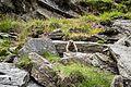 Marmotte et ses rochers.jpg