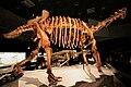 Maxakalisaurus skeleton.jpg