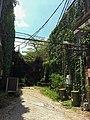 McKinney urban jungle.jpg