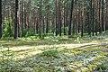 Mežs, Džūkstes pagasts, Tukuma novads, Latvia - panoramio (1).jpg