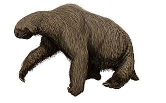 Megalonyx - Restoration of M. wheatleyi