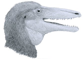 Portezuelo Formation - Megaraptor namunhuaiquii