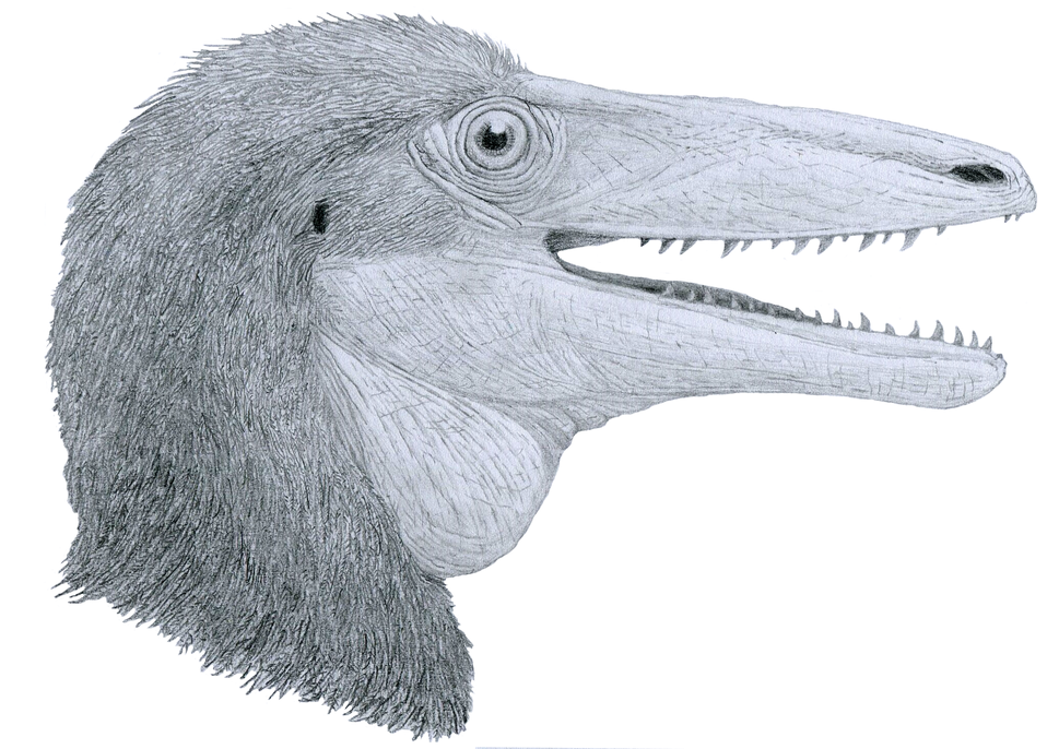 Megaraptor bust