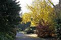 Melb botanical gardens.jpg