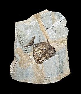 Ce sont 2 façons de datation des fossiles
