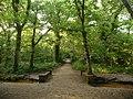 Merley, track through Delph Woods - geograph.org.uk - 1417753.jpg
