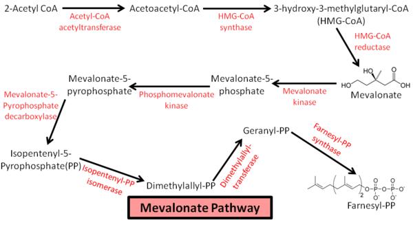 astaxanthin hormones