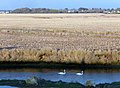Milford on Sea , Sturt Pond and Fields - geograph.org.uk - 1721793.jpg