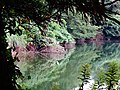 Miyajitake jinja lake - panoramio.jpg