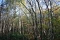 Moat Wood - geograph.org.uk - 1568603.jpg