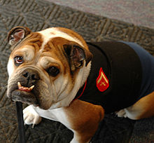 Image Result For Dog Training Savannah